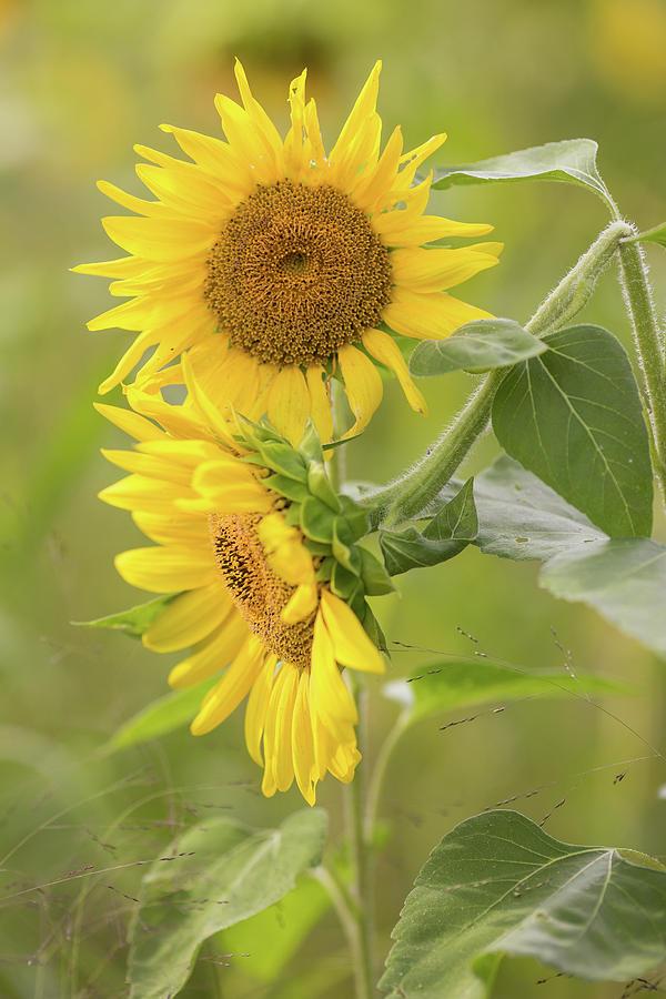 Summer Blooms by Sara Hudock