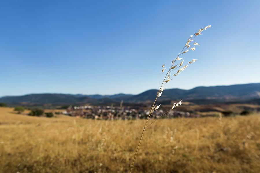 Spain Photograph - Summer Breeze by Sam Garcia