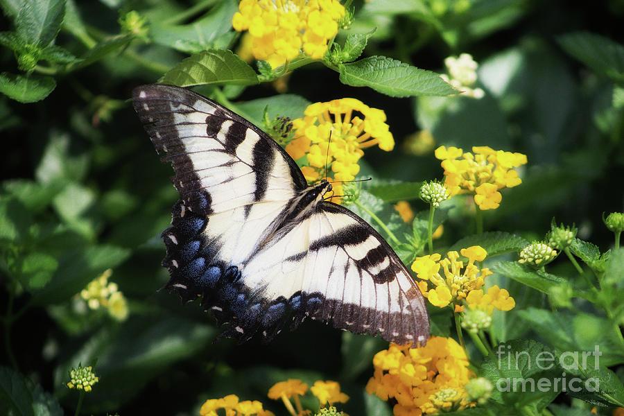Summer Butterfly by Mechala Matthews