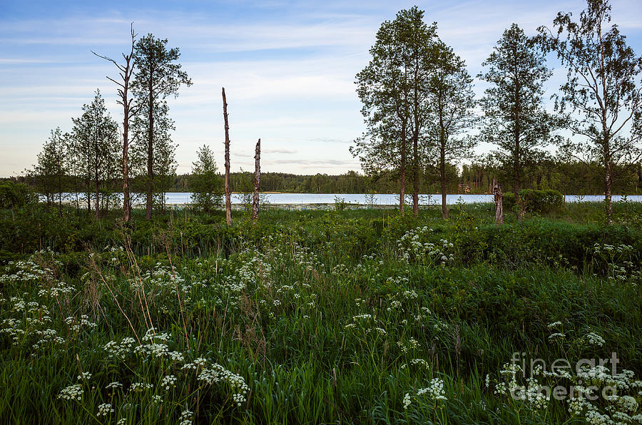 Summer Photograph - Summer By The Lake Enajarvi by Ismo Raisanen