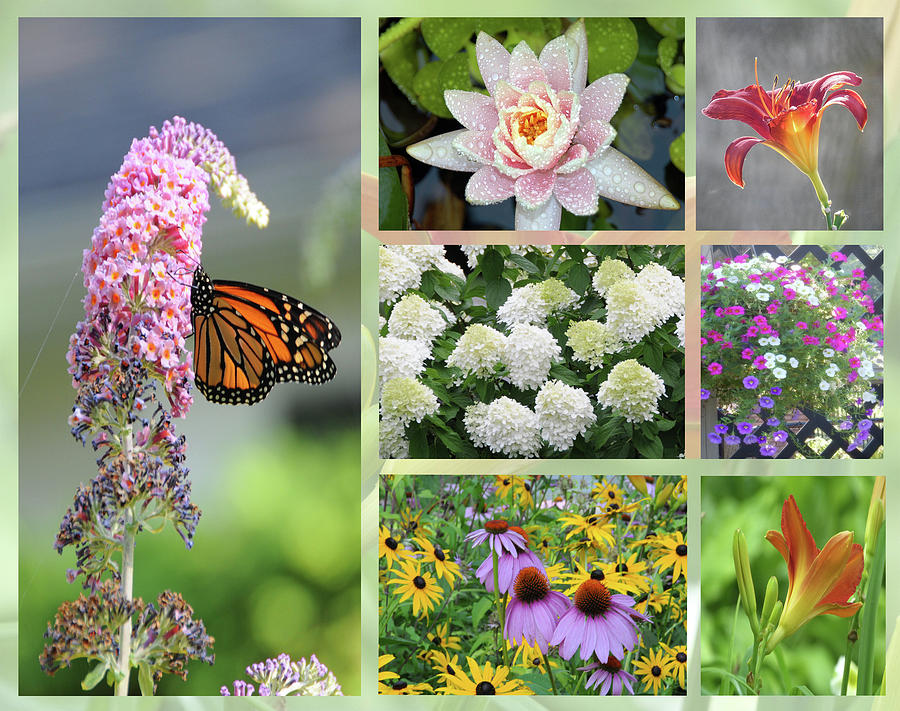 Summer Collage by Geraldine Alexander