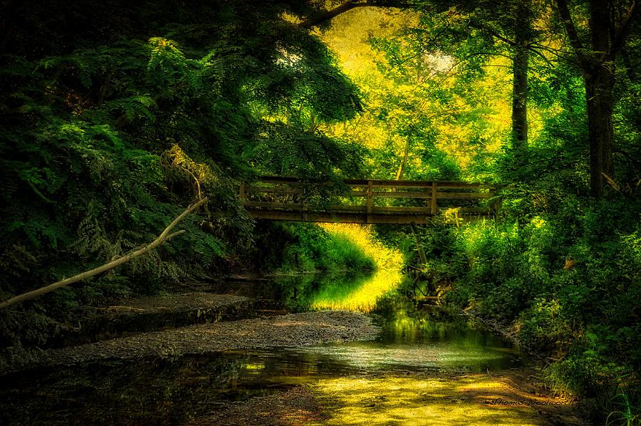 Creek Photograph - Summer Creek by Thomas Woolworth