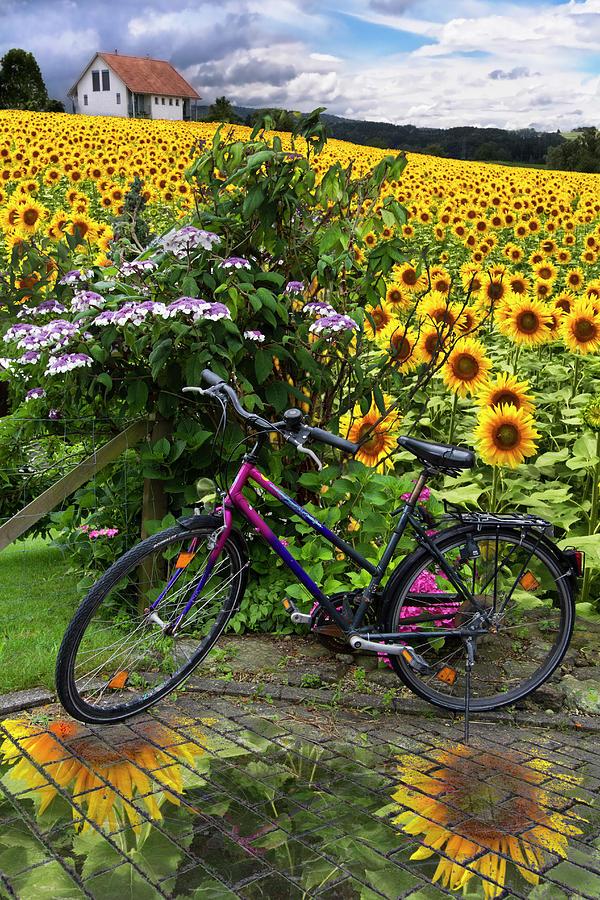 Austria Photograph - Summer Cycling by Debra and Dave Vanderlaan