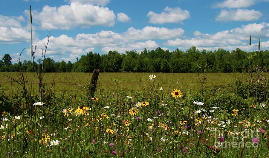 Nikon Photograph - Summer Dreams... by Nina Stavlund