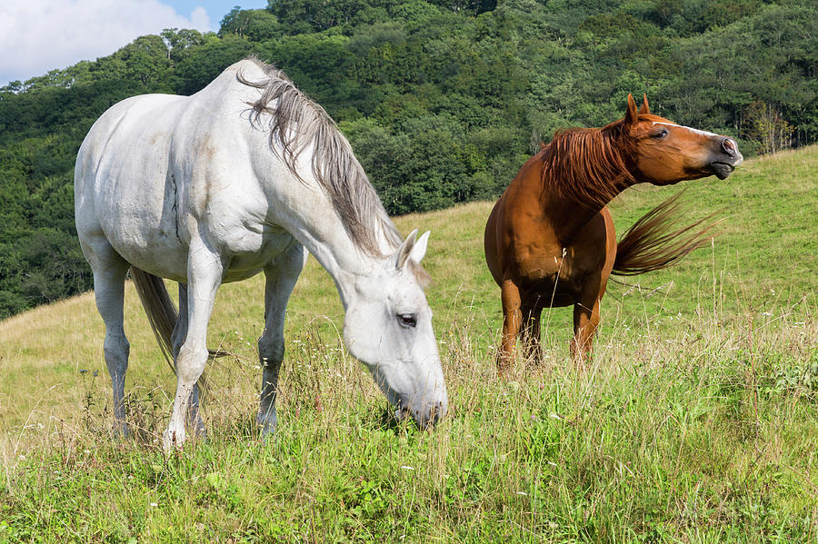 Horses Photograph - Summer Evening For Horses by D K Wall
