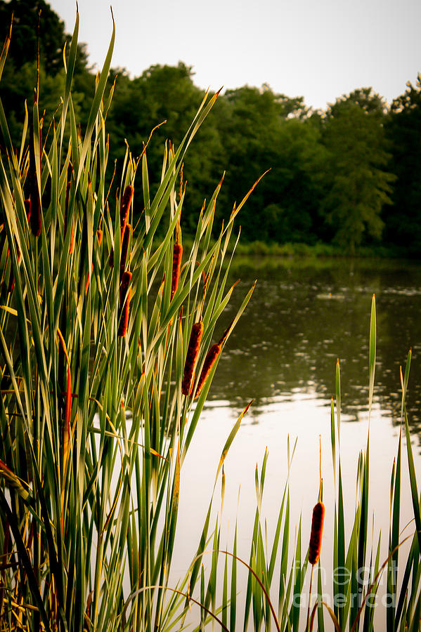 Lakes Photograph - Summer Evening On The Pond by Jim Raines