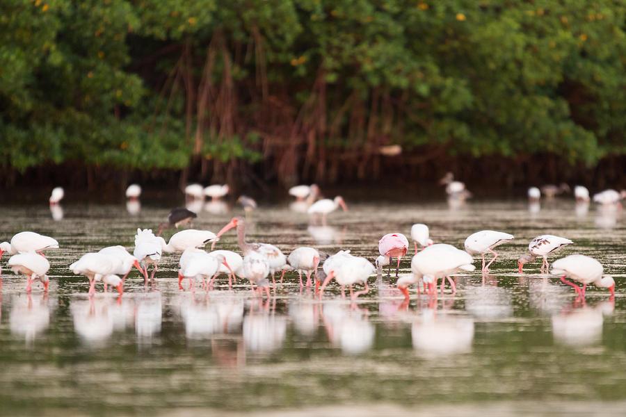 Birds Photograph - Summer Feast by Mary  Swann
