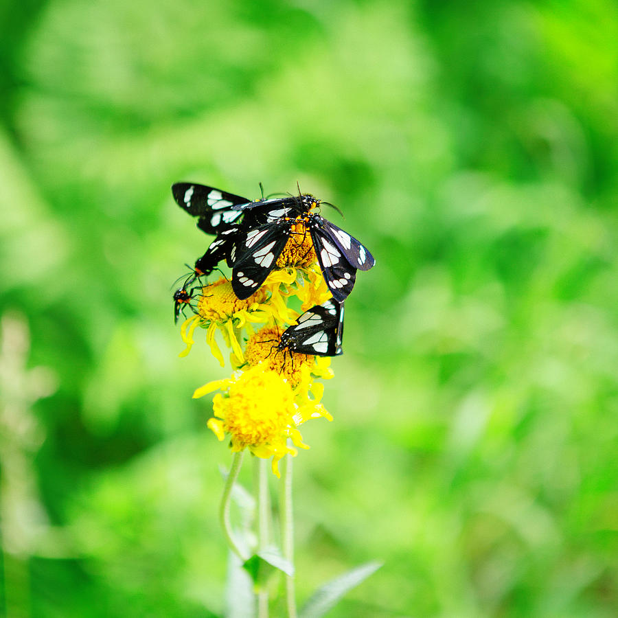 Arizona Photograph - Summer Field by CEB Imagery