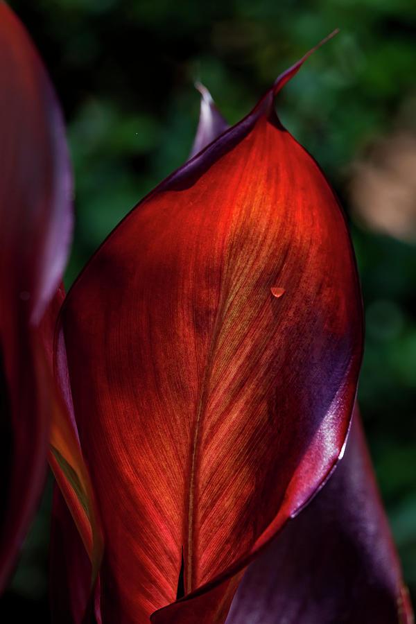 Leaves Photograph - Summer Fire by Robert Ullmann