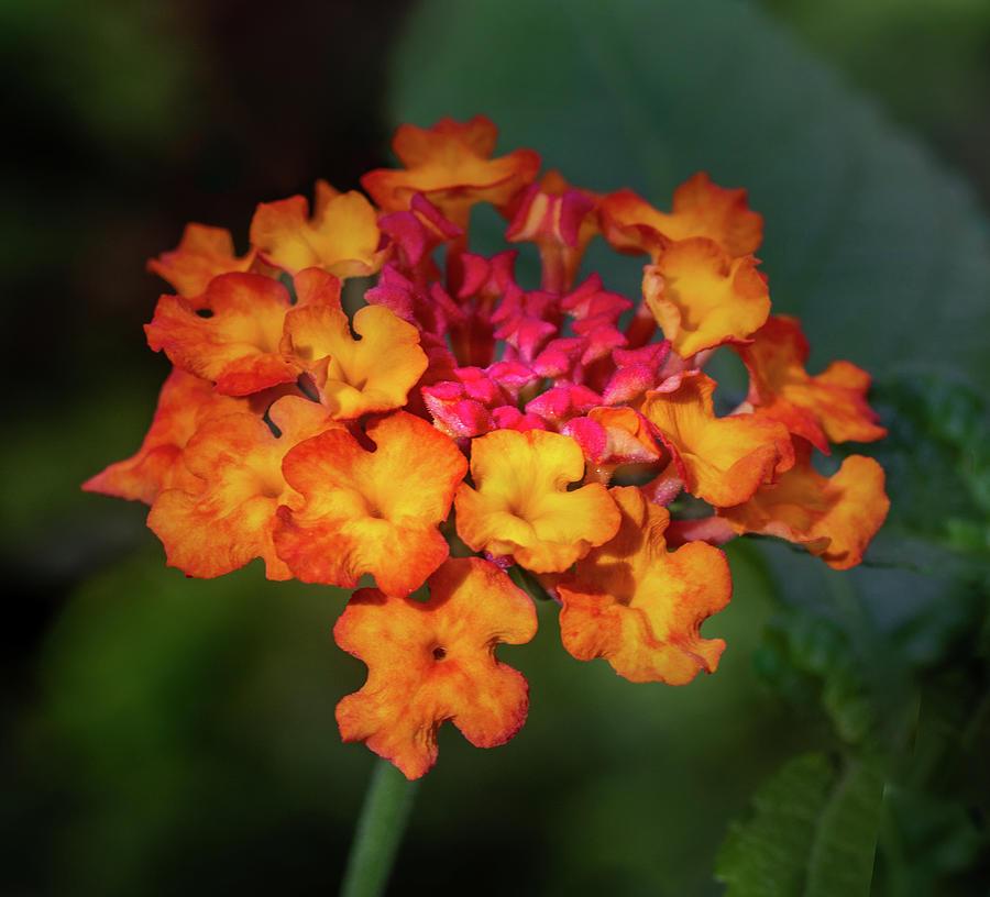 Summer Floral Colors Photograph