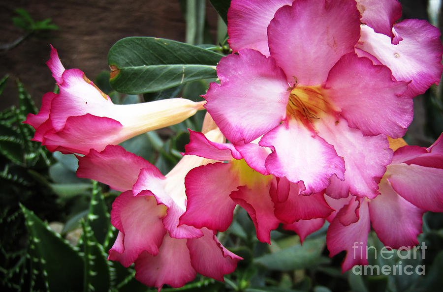 Flowers Photograph - Summer Forever by Robert Knight
