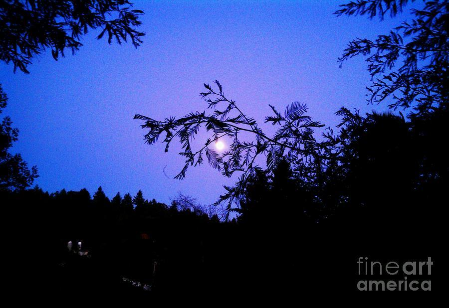 Blue Photograph - Summer Full Moon by Garnett  Jaeger