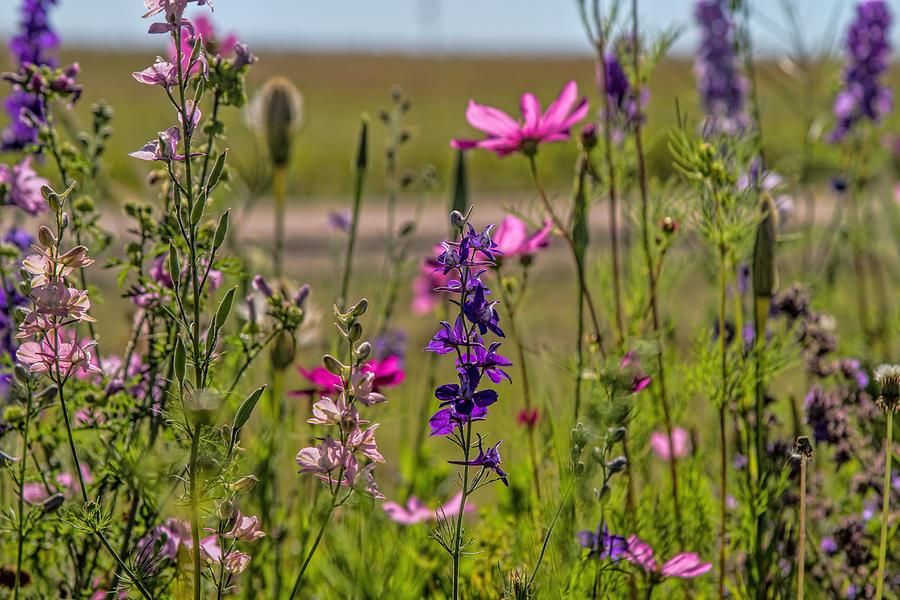 Summer Garden Photograph by Alana Thrower