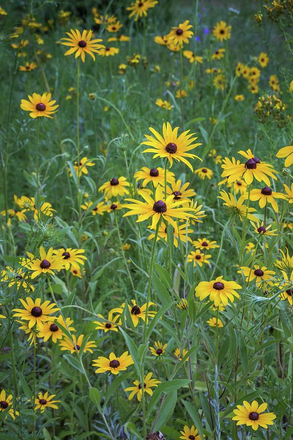 Garden Photograph - Summer Garden by Debbie Gracy