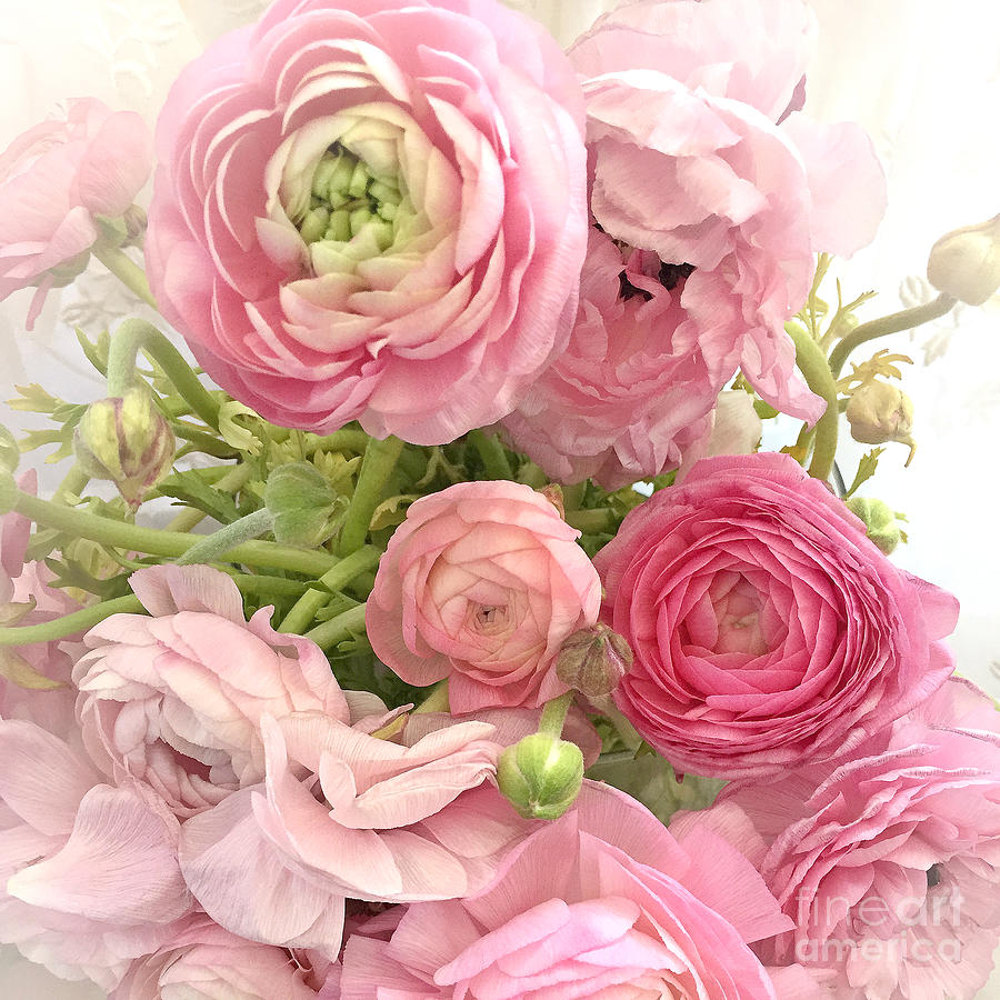 Ranunculus Peonies Roses Flowers Prints Wall Decor