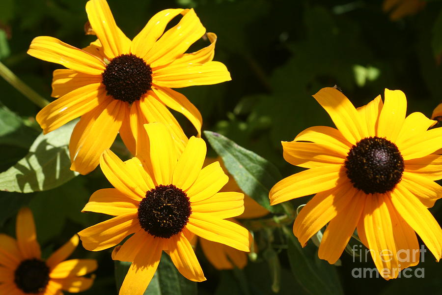 Summer Photograph - Summer Glow by Amy Holmes