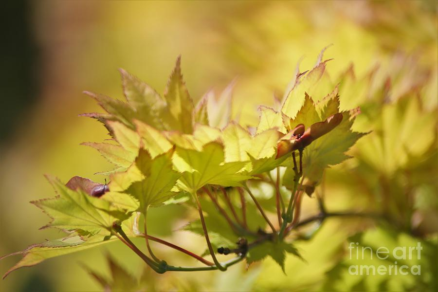 summer gold by Sheila Ping