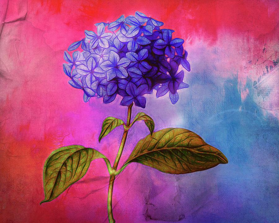 Summer Hydrangea by Terry Fleckney