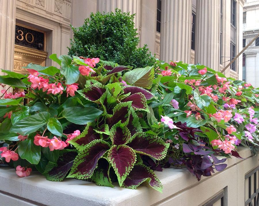Flowers Photograph - Summer In The City by Jacqueline Manos