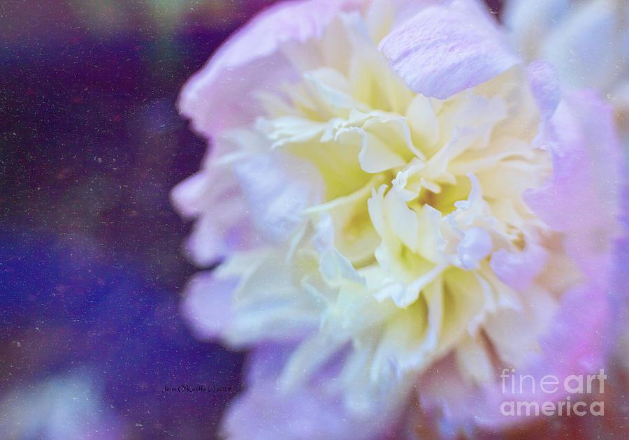 Flower Photograph - Summer by Jean OKeeffe Macro Abundance Art