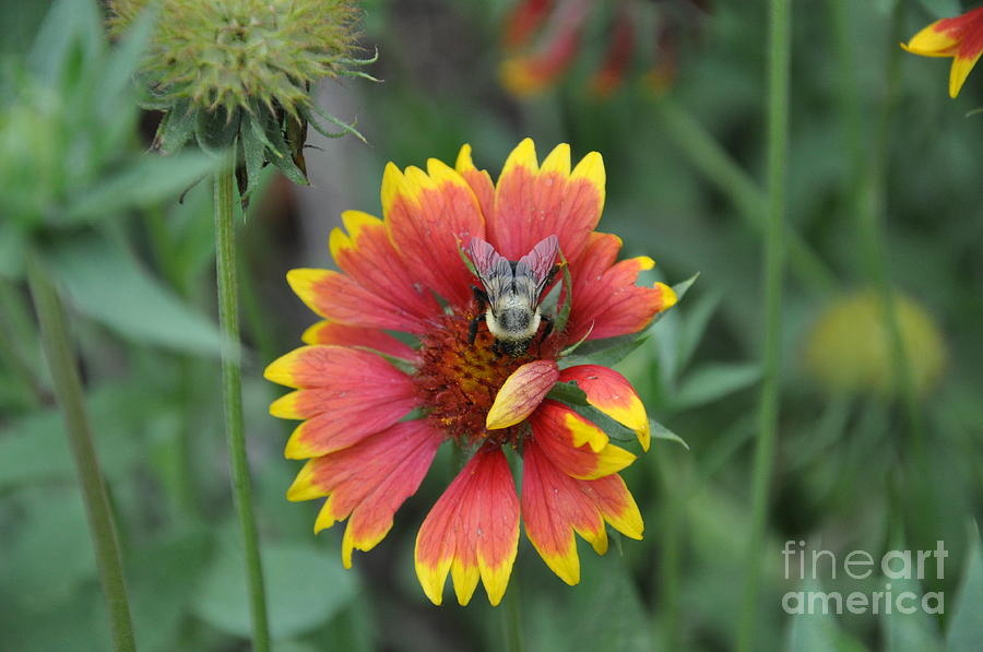 Flower Photograph - Summer by Jo Thompson Pennypacker