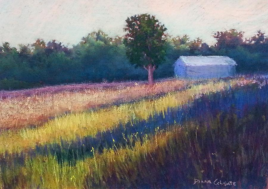 Summer Light by Diana Colgate