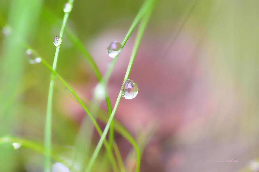 Dew Photograph - Summer Of Dreams by Donna Blackhall