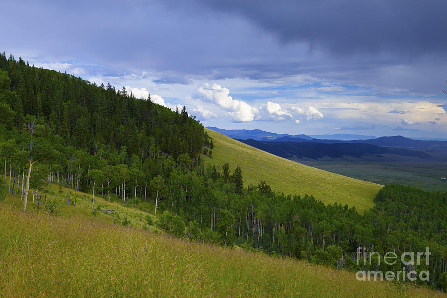 Summer On Kenosha Pass by Barbara Schultheis