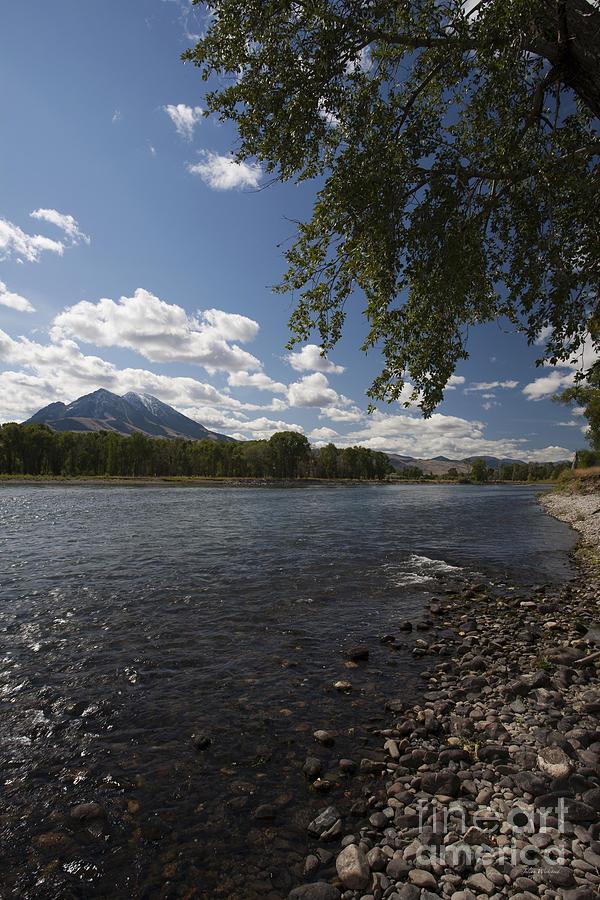 Summer on the Yellowstone - Montana by Julian Wicksteed