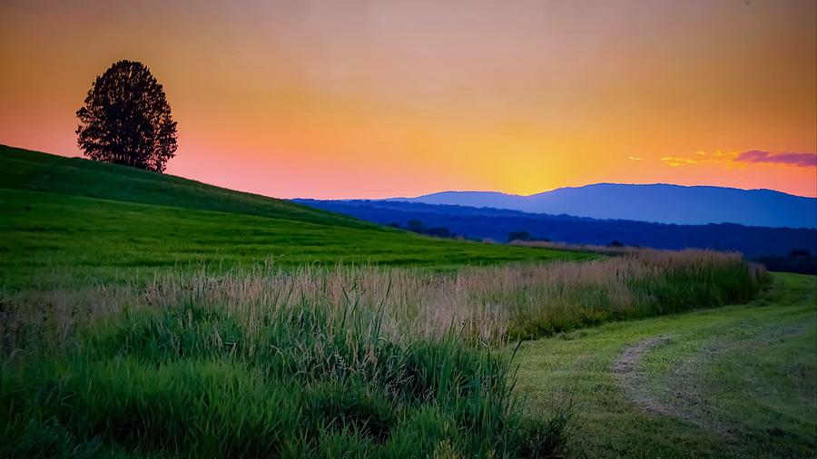 Summer Palette Photograph by Kendall McKernon