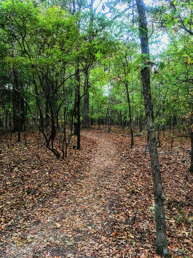 Shiloh Photograph - Summer Path At Shiloh by WildBird Photographs