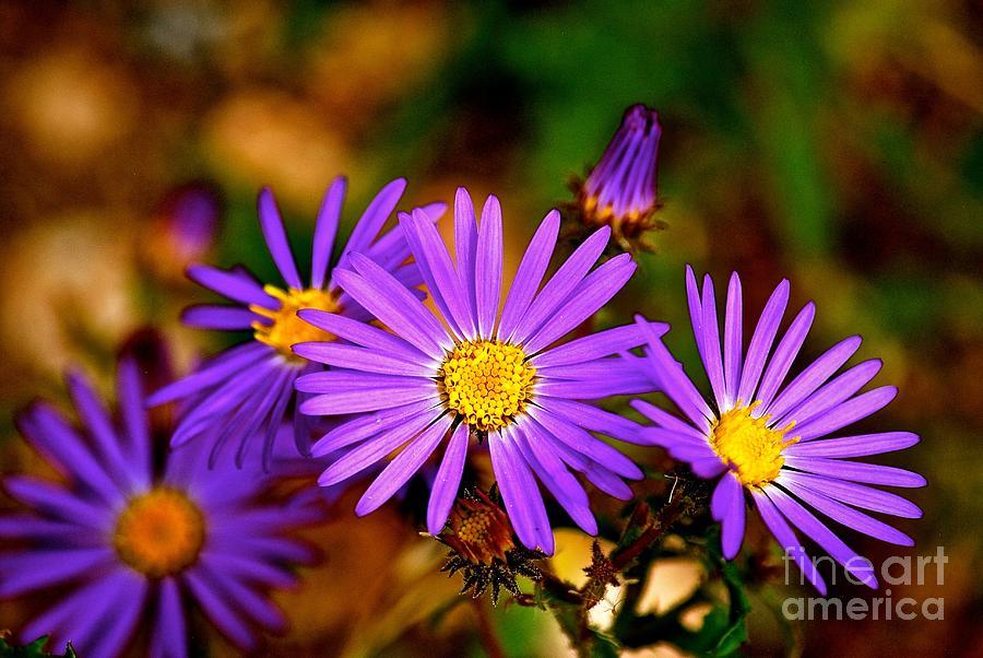 Summer Purple Photograph by Christine Scott