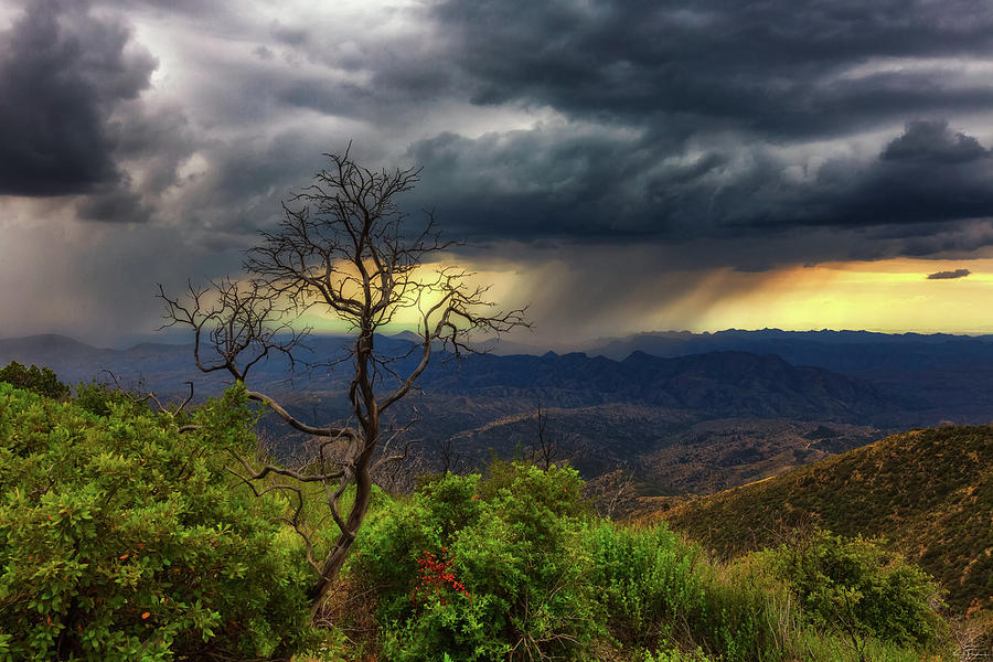 Arizona Photograph - Summer Rains by Rick Furmanek