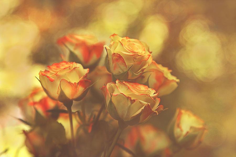 Roses Photograph - Summer Roses #1 by Pat Abbott