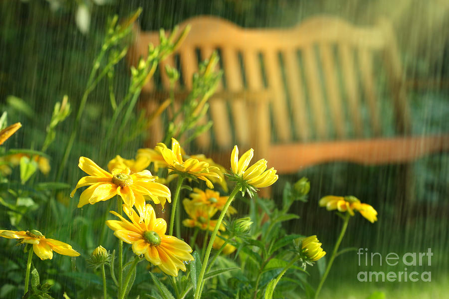 Abstract Digital Art - Summer Showers by Sandra Cunningham