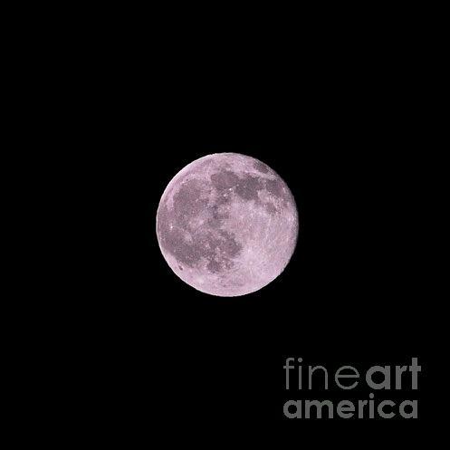 Summer Solstice Strawberry Moon by Bridgette Gomes