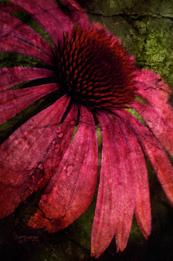 Garden Photograph - Summer Splendor by Joy Gerow