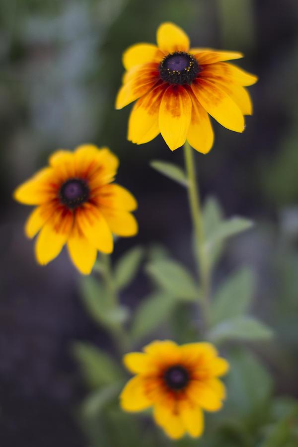 Yellow Photograph - Summer Threesom by Rebecca Cozart