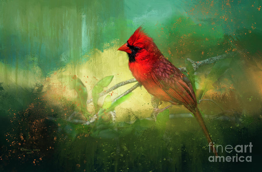 Northern Cardinal Photograph - Summer Time by Marvin Spates