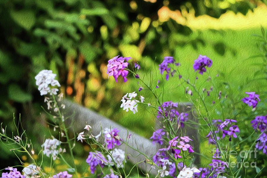 Summer Time Phlox Oil Painting Photograph