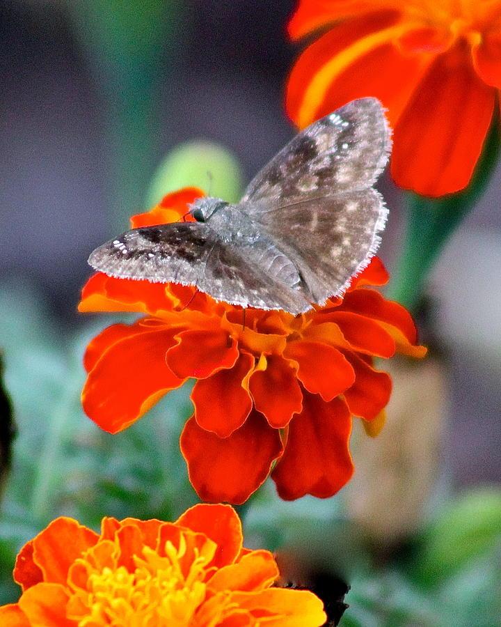 Summer Visitor by Joy Buckels