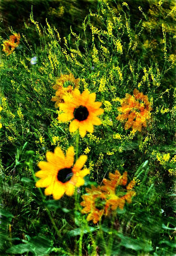Wildflowers Digital Art - Summer Wildflower Dreams by Aliceann Carlton