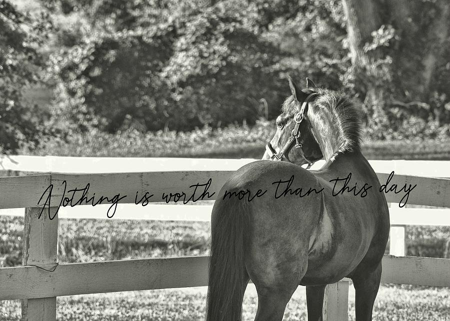 Horse Photograph - Summers Eve Quote by JAMART Photography