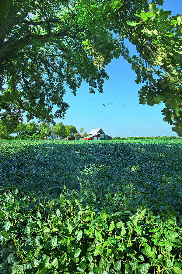 Summer Photograph - Summertime Blues by Phil Koch