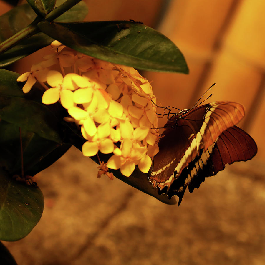 Summertime Butterfly Photograph by Judy Vincent