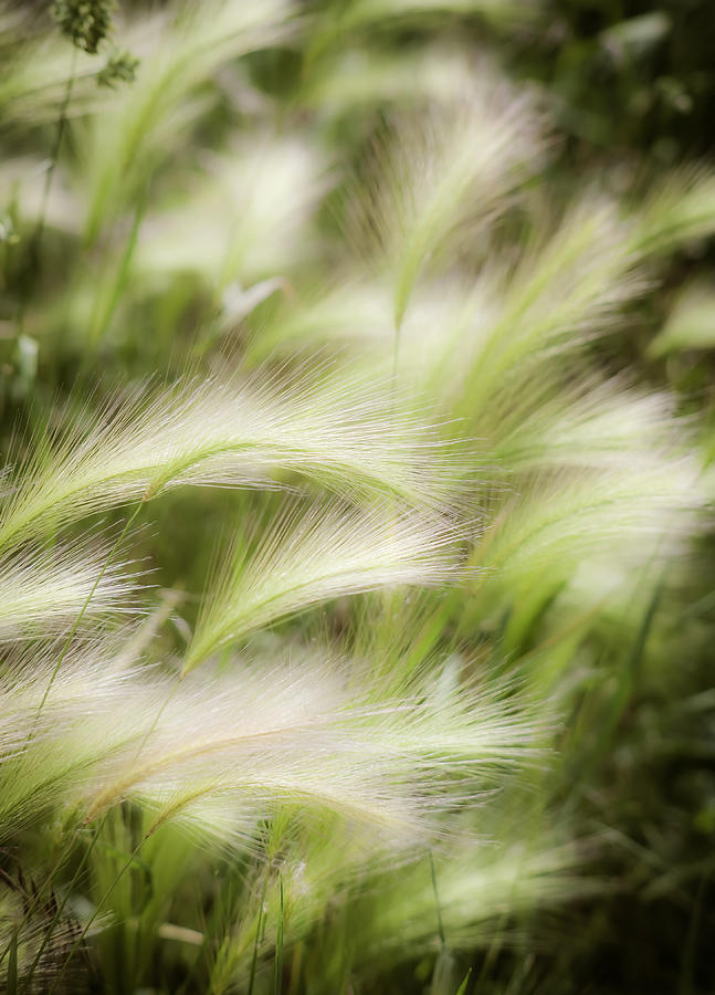 Soft Photograph - Summertime by Marilyn Hunt