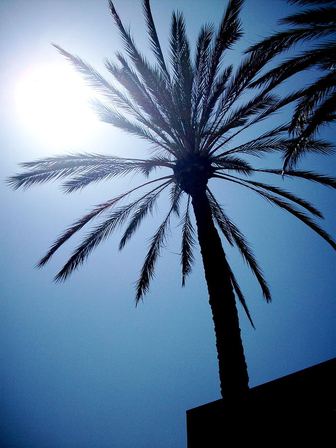Palm Photograph - Sun And Palm by Marina Owens