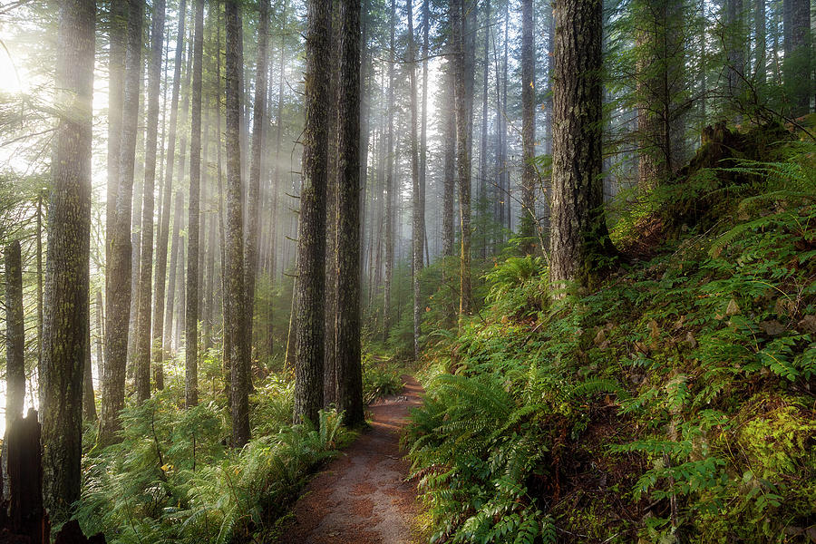 Washington Photograph - Sun Beams Along Hiking Trail In Washington State Park by David Gn