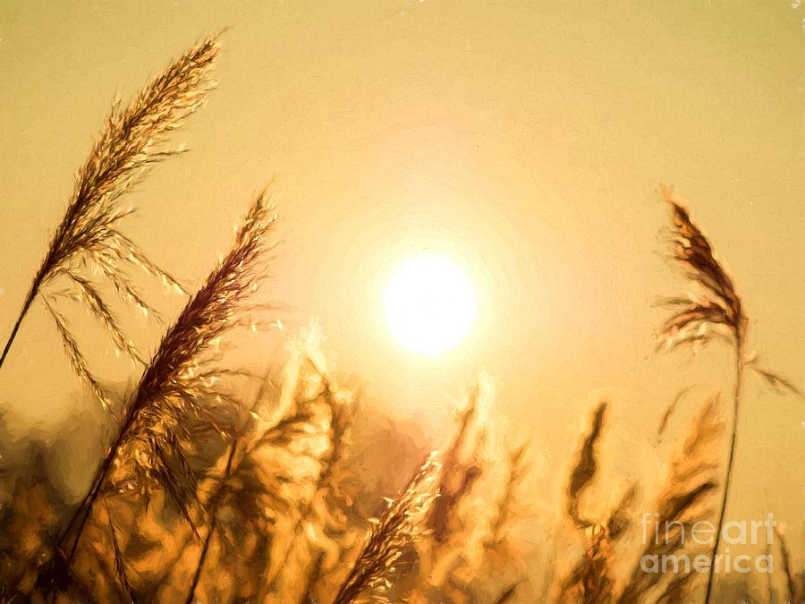 Sun Photograph
