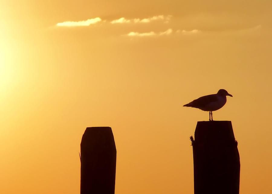 Beach Photograph - Sun Is Rising by JAMART Photography
